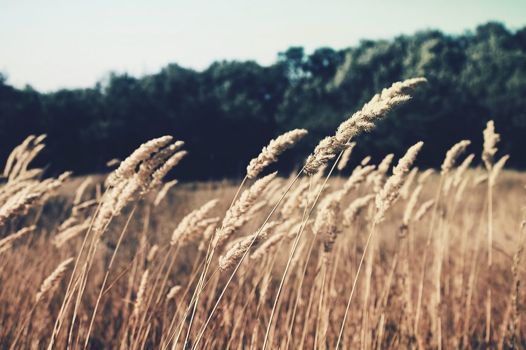 Choosing to be wheat or chaff